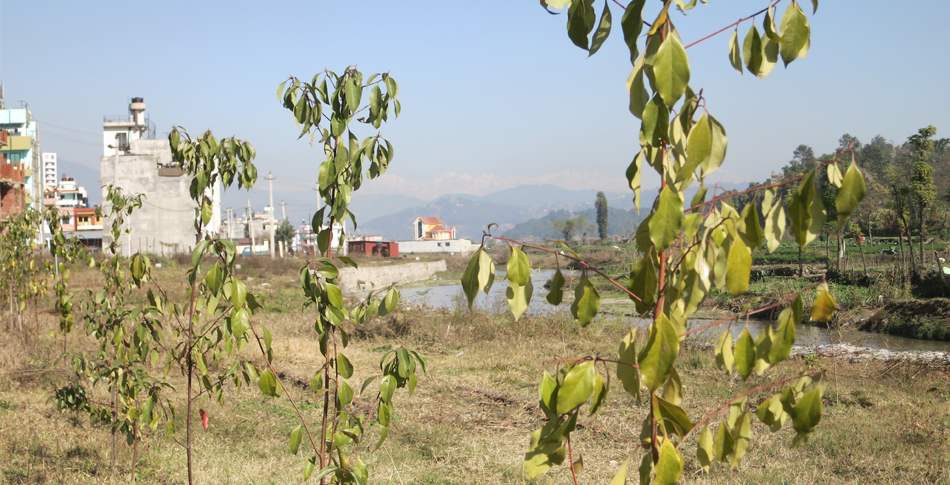Our first demonstration and urban greening  site in Nepal, situated on the Manohara river between Kathmandu and Bhaktapur
